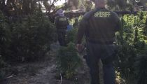 Riverside County Sheriff Department Seizes 5.9 Tons of Marijuana