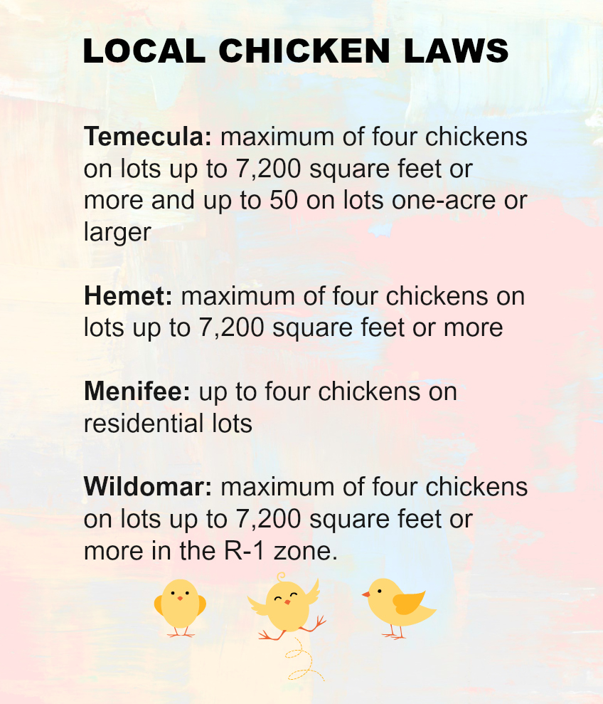 Chicken Laws