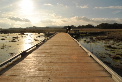 The boardwalk at vernal pools